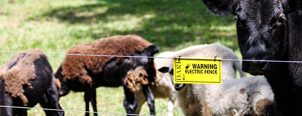 Building high tensile electric fence for livestock